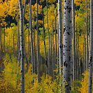 'Colorado Gold' by Rondo93