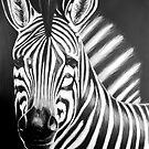 zebra painting by dave reynolds