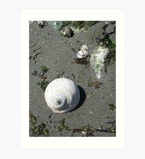 Snails Rock Art Print