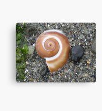 Snail Shell Canvas Print