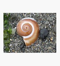 Snail Shell Photographic Print