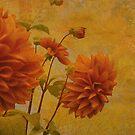Dalias in Orange by Jeff Burgess
