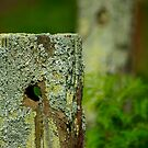 Fence Post by waxyfrog