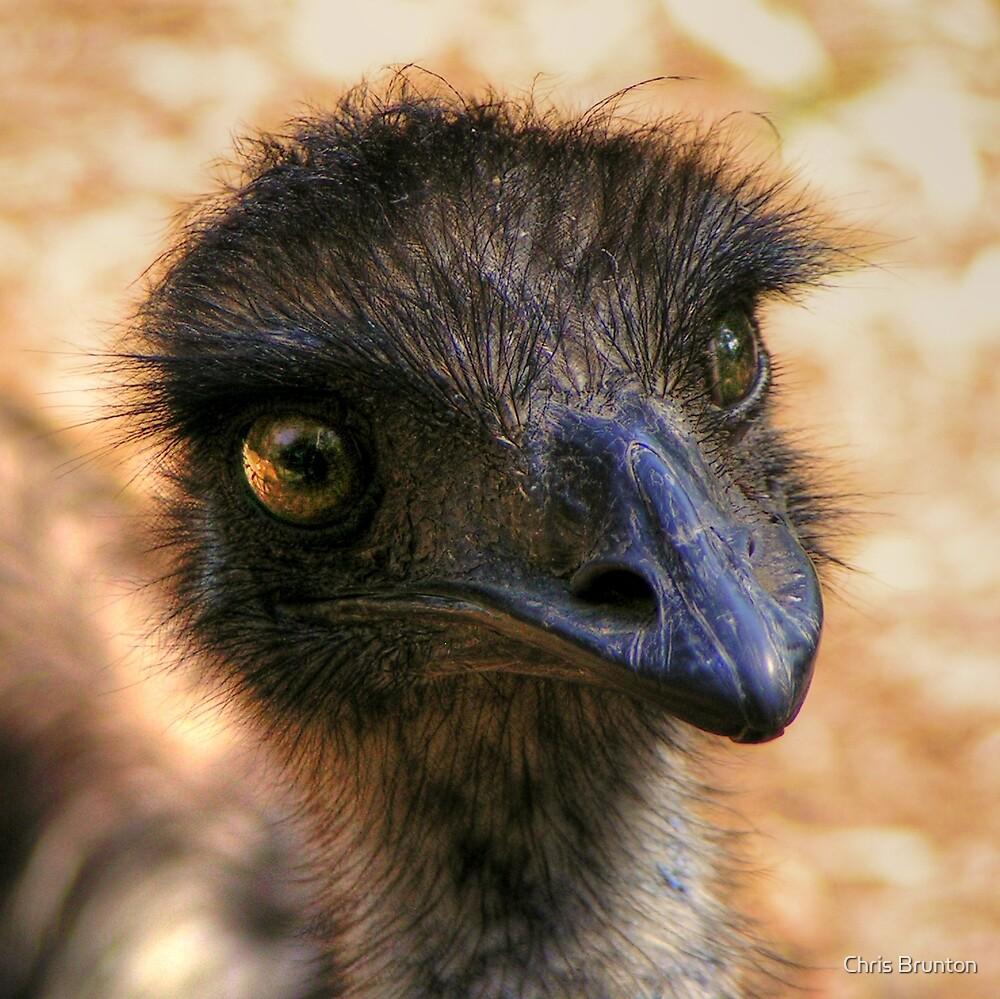 I'm watching you! by Chris Brunton