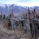 Old Rugged Fence by teresalynwillis