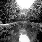 Canal Canapy #2 by Frank Bibbins