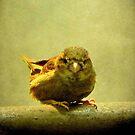 I see you too!!! © by Dawn Becker