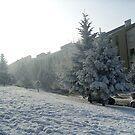 Winter in my street by Ana Belaj