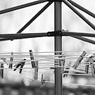 Clothespins on the Line In Black and White by Bo Insogna