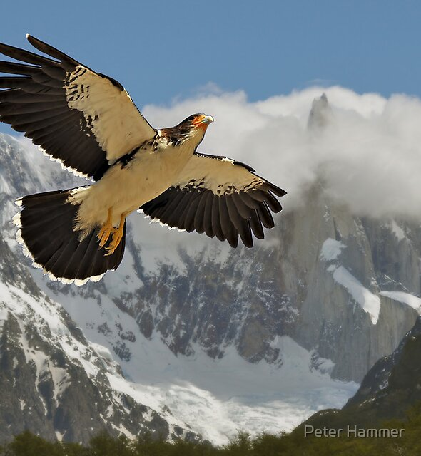 Flying High by Peter Hammer