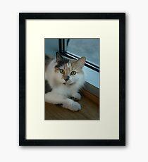 Buffy - Cat  Framed Print