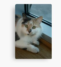 Buffy - Cat  Canvas Print