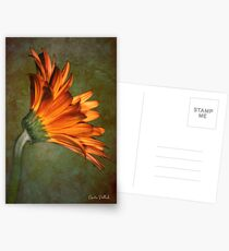 Daisy on an Antique Wall Postcards