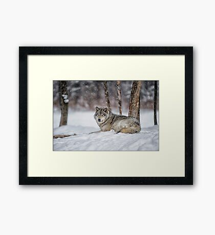 Waiting on a friend... Framed Print