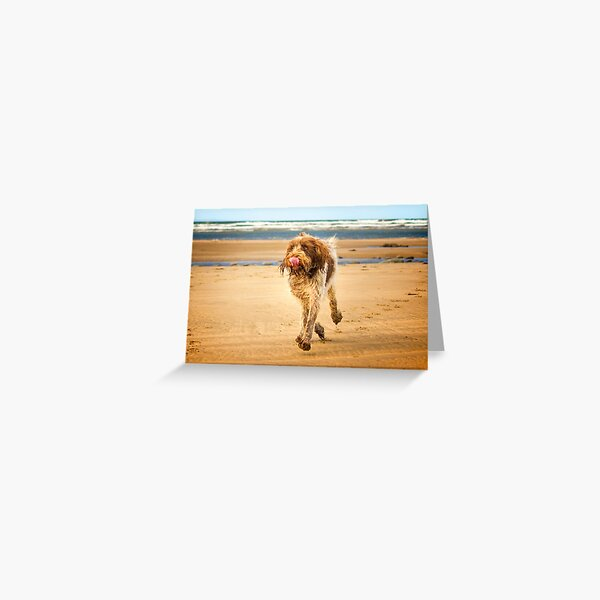 Eyes on the ice cream Spinone Greeting Card