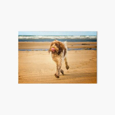 Eyes on the ice cream Spinone Art Board Print
