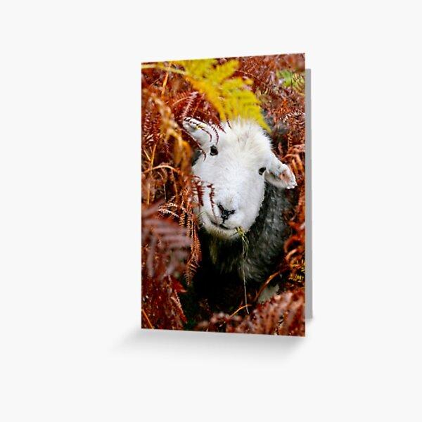 Herdy Gerdy !  Greeting Card