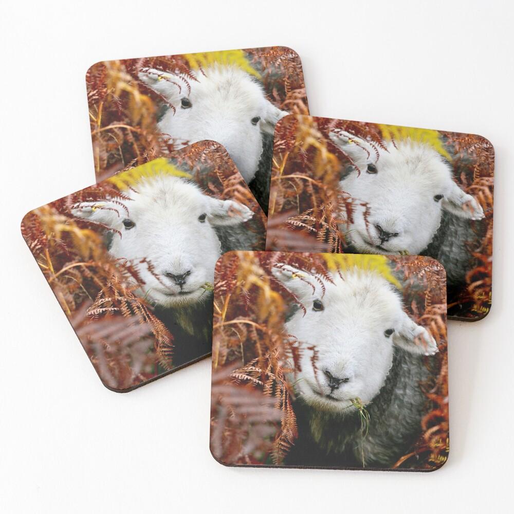 Herdy Gerdy !  Coasters (Set of 4)