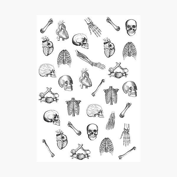 Anatomical Pattern • Vintage Illustration • Black And White Photographic Print