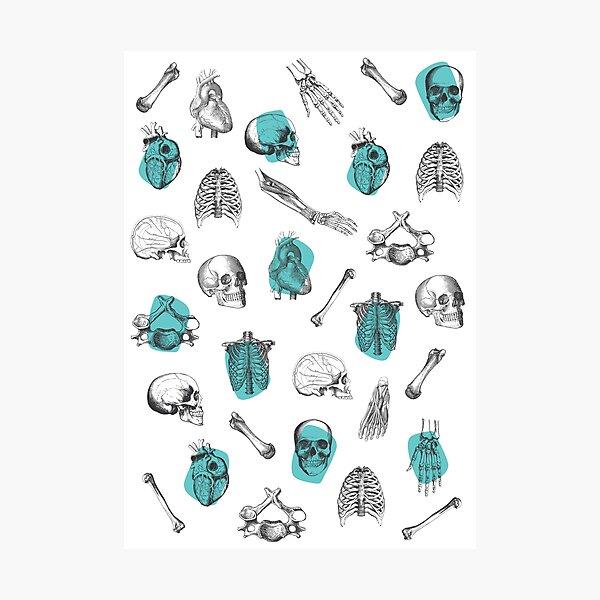 Anatomical Pattern • Vintage Illustration • Turquoise Photographic Print
