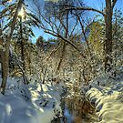 """"""" Snow, Sun, and Shadows"""" by K D Graves Photography"""