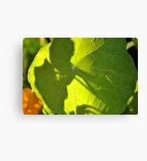 Looking through Leaf Canvas Print