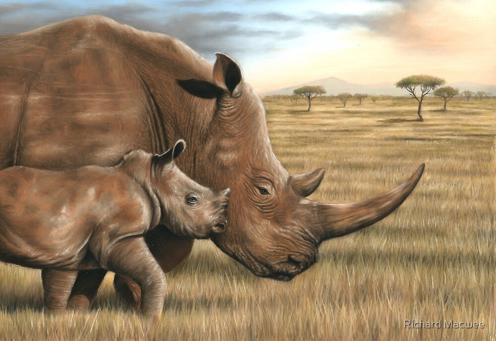 Wildlife artwork of a Rhino and Calf by Richard Macwee