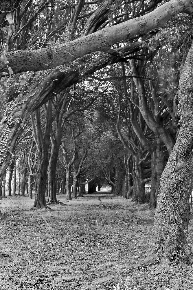 Trees near Phoenix Park School, Dublin by Dave  Kennedy
