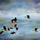 Beauty of flight by John Rivera