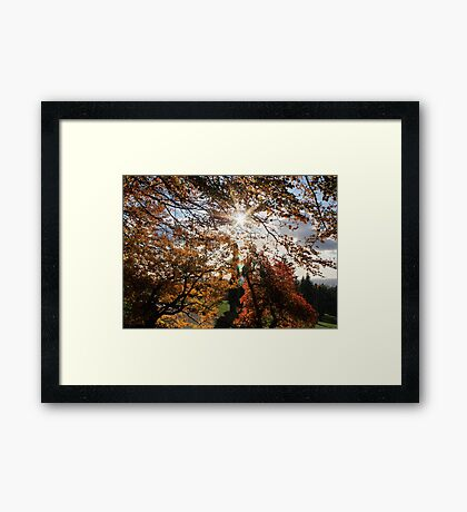 Fall in BC Framed Print