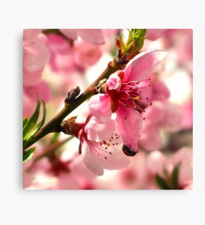 Lady Bug Pink Canvas Print