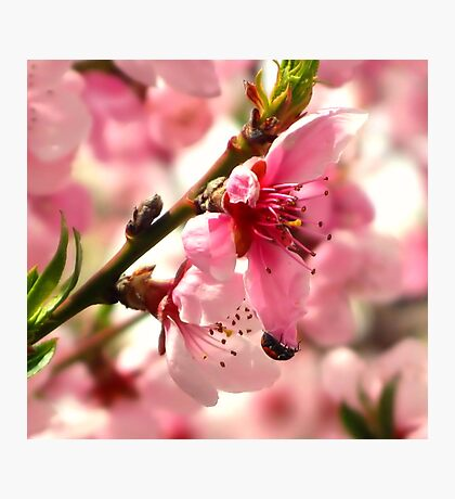 Lady Bug Pink Photographic Print