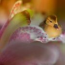 Precious by Linda Cutche