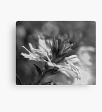 Black and White Flower Macro Canvas Print