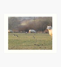that sheep insists on posing! Art Print