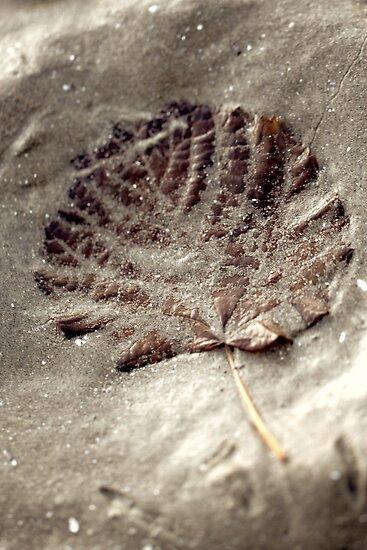 sandyish leaf by yvesrossetti