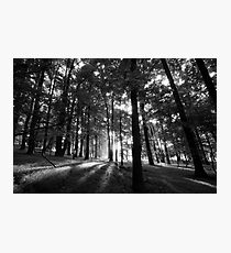 Shadow Trees Photographic Print