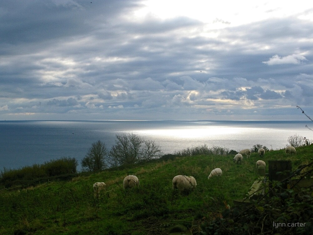 Sheep In Field Overlooking The Sea At Lyme , Dorset  UK by lynn carter