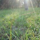 aging grass by Rishi Kant Joshi