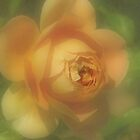 Pastel Apricot Rose by Geoffrey Higges