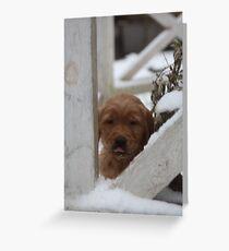 Brady Raspberries To You Greeting Card