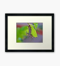 Hungry little Caterpillar Framed Print