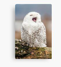 Snowy Owl Yawning Canvas Print