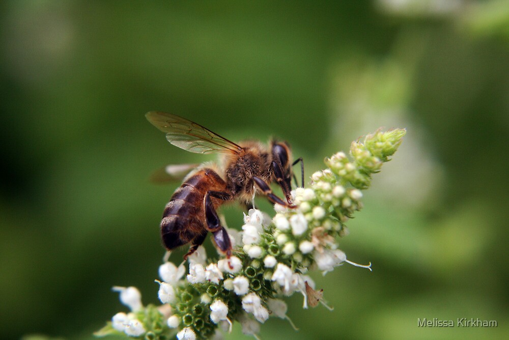 Mint Bee by Melissa Kirkham