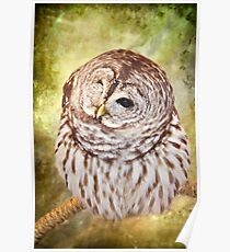 Such A Hoot! Poster