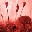 Poppies Art Images 2012 3 colors by Falko Follert