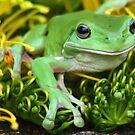 little green frog by Trish Threlfall