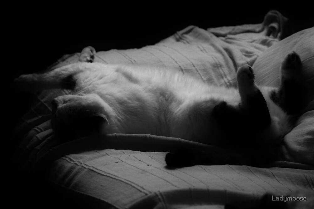A Hard Days Night by Ladymoose