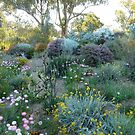 Springtime In Kings Park. by joycee