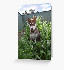 Jax-husky/malamute puppy Greeting Card